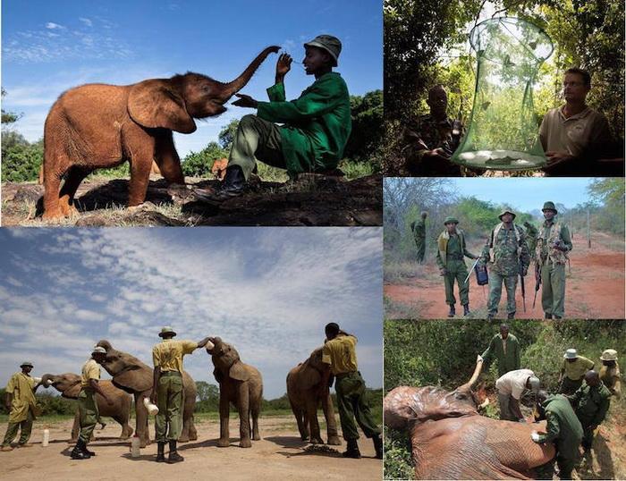 Браконьерство - главная причина вымирания слонов