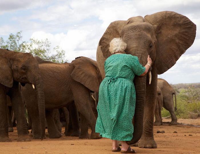 Трогательные фотографии воспитанников Фонда живой природы Дэвида Шелдрика