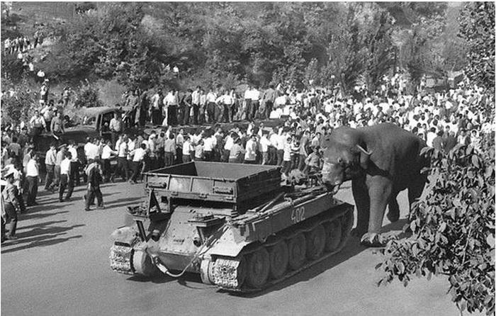 Слон Вова - житель ереванского зоопарка