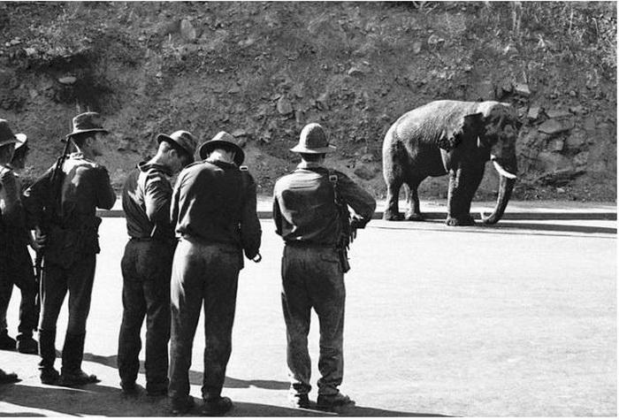 Милиция добивает несчастного слона