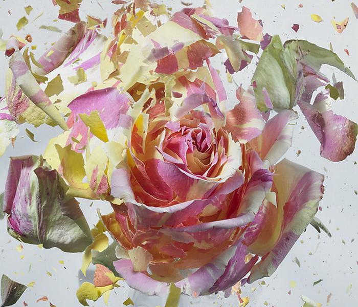 Взрывающиеся цветы на фотографиях Мартина Климаса