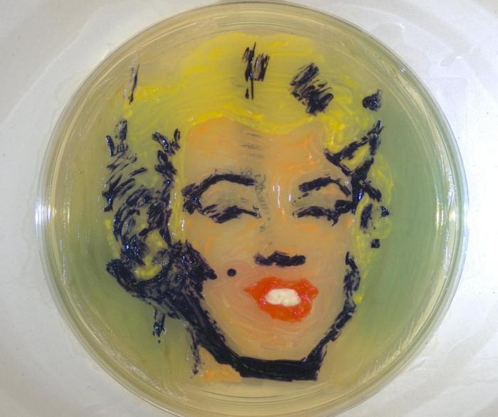 Современные рисунки из микроорганизмов на чашках Петри.