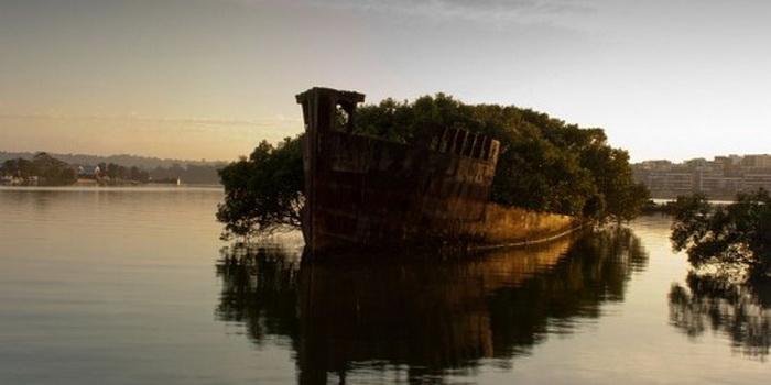SS Ayrfield: Корабль - плавающий лес (Сидней, Австралия)