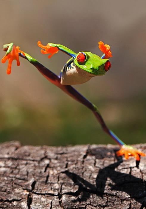 http://www.kulturologia.ru/files/u12645/frog-6.jpg
