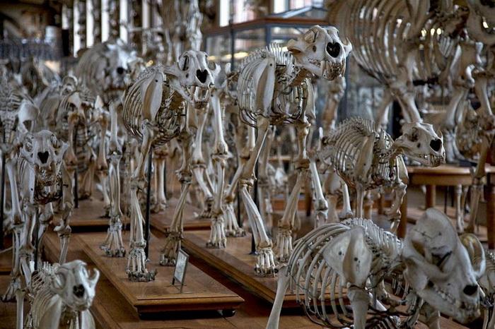 Галерея сравнительной анатомии и палеонтологии (Париж)