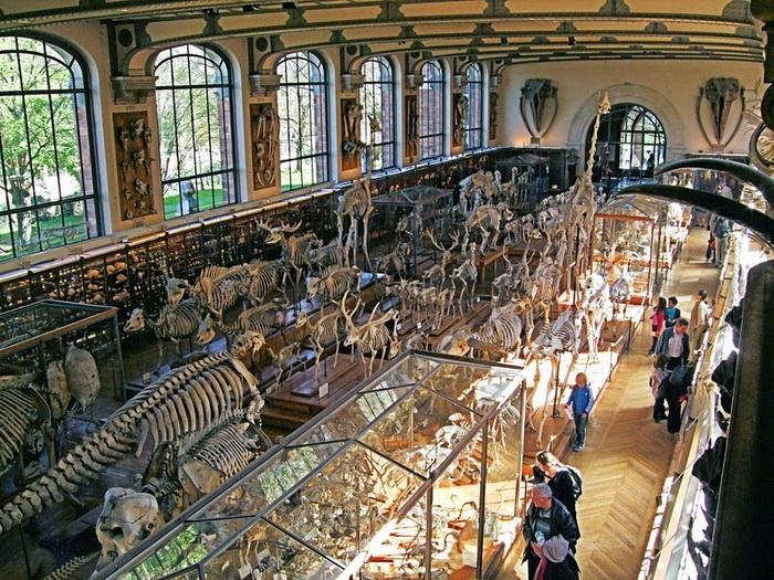 Коллекция включает тысячи скелетов