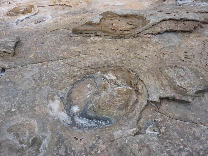 Окаменевшие следы динозавров - главная достопримечательность Гантеаум Пойнт (Австралия)