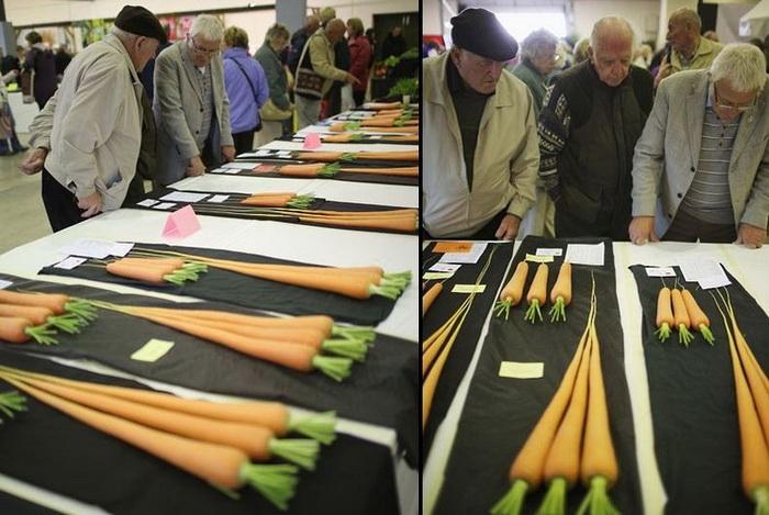 У кого длиннее: морковки-рекордсмены на осенней выставке цветов и овощей в Харрогейте