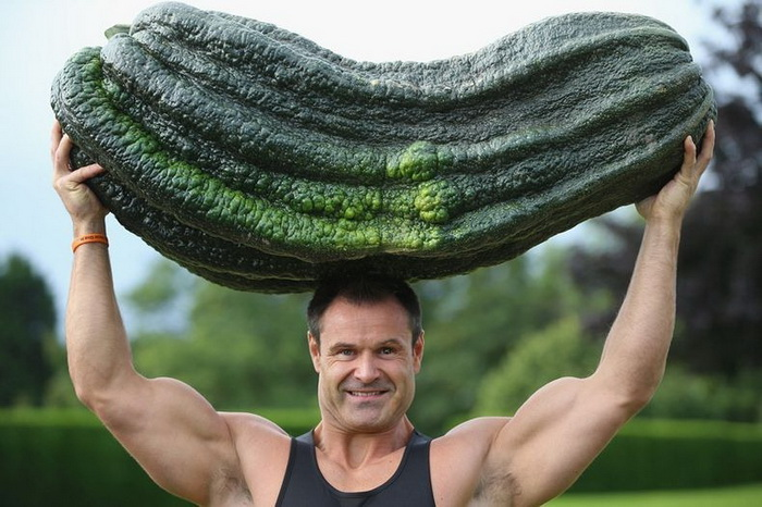 Кабачок-гигант на осенней выставке цветов и овощей в Харрогейте