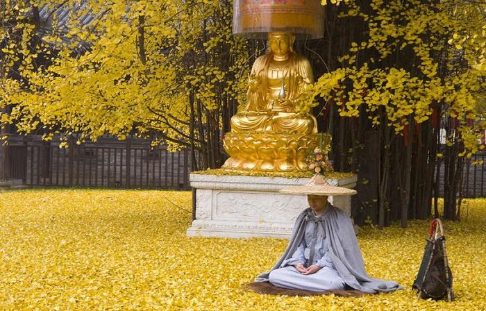 Дерево растет у буддийского храма  Gu Guanyin