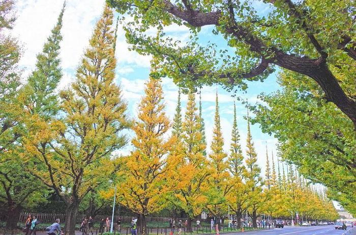 Начало осени, листья только начинают желтеть