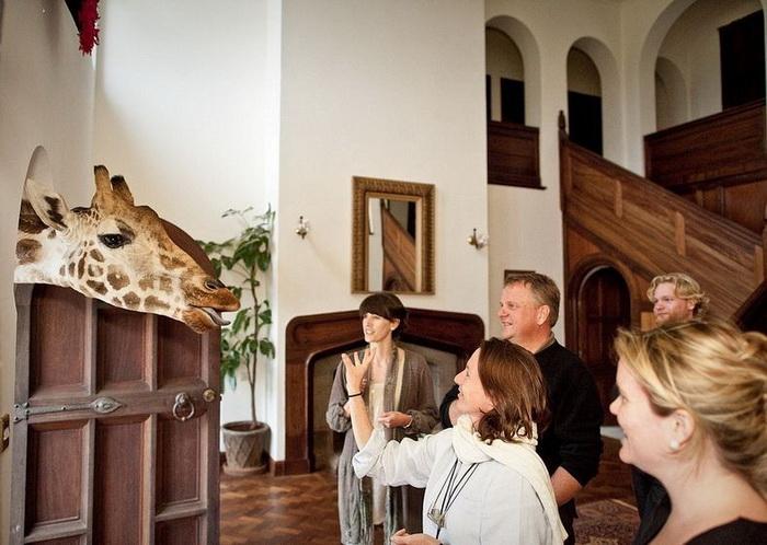 Отель Giraffe Manor (Найроби, Кения)