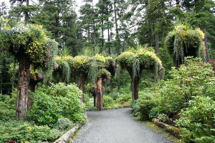 Необычные деревья-клумбы в ботаническом саду Glacier Gardens на Аляске