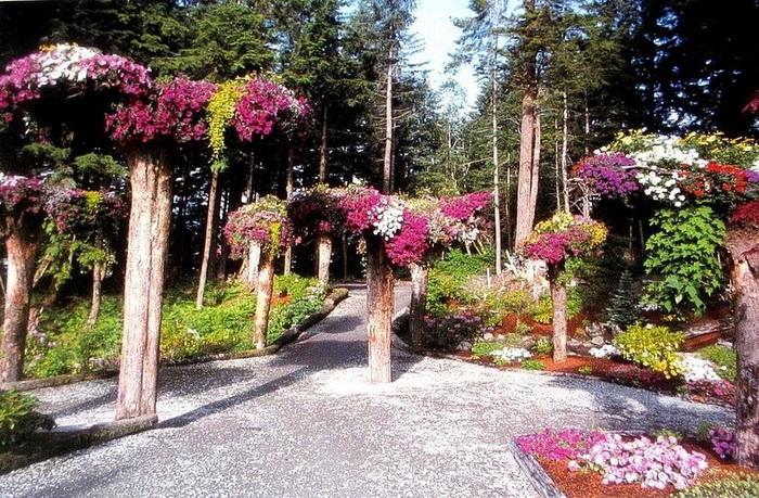 Ботанический сад Glacier Gardens на Аляске