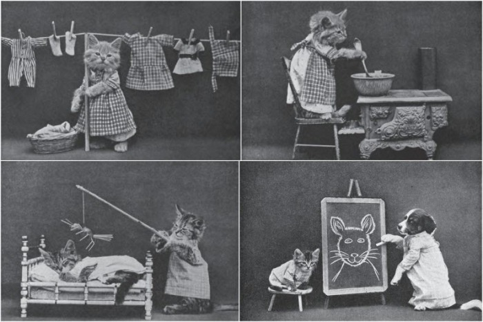 Забавные снимки котов от Harry Whittier Frees