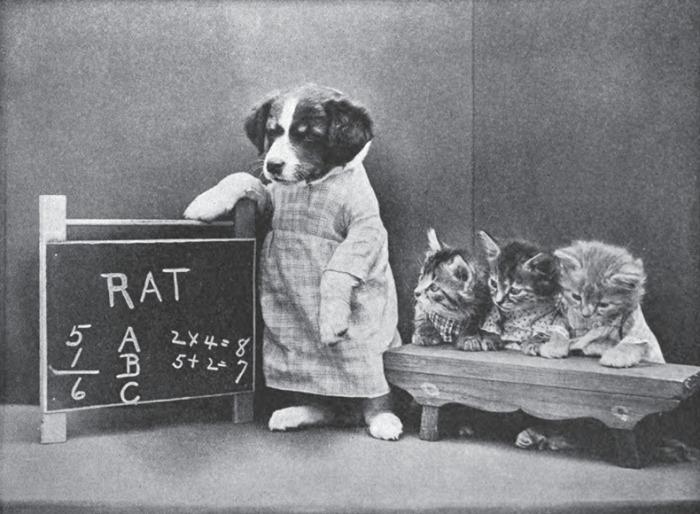 На фотографиях Harry Whittier Frees коты ведут себя, как люди