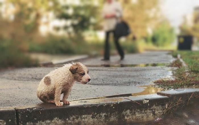 Бездомный щенок на улице большого города. Фото: fttc.com.ua
