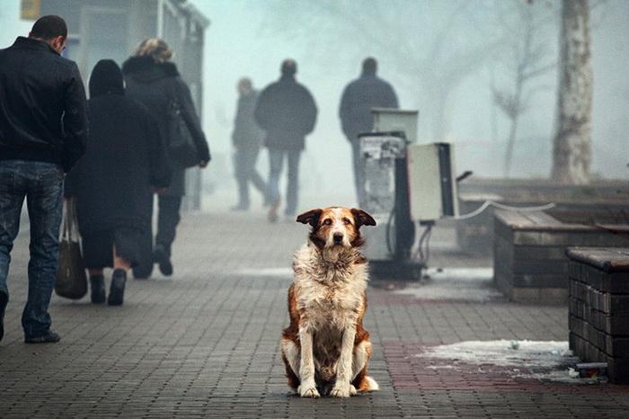Отношение хозяев к животным должно быть ответственным. Фото: vesti.dp.ua