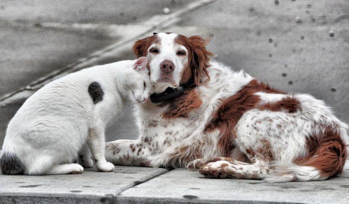 Первое место по количеству бездомных животных среди европейских стран занимает Испания. Фото: espanarusa.com
