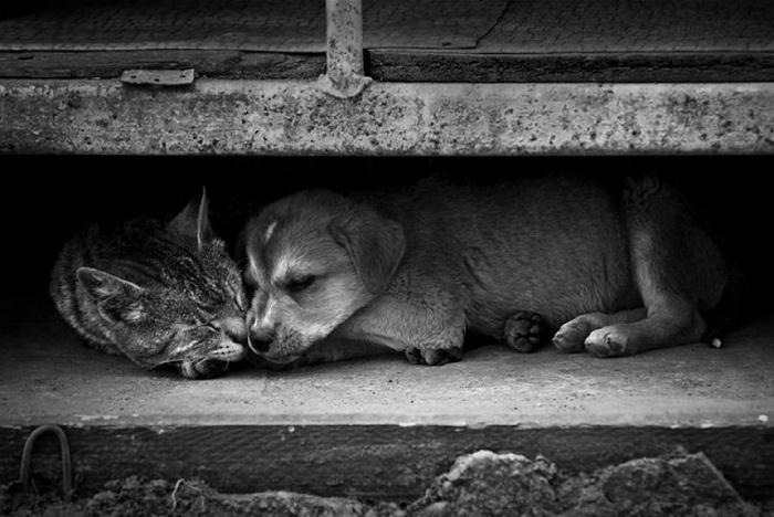 Уличные кошки и собаки. Фото: ecoportal.info