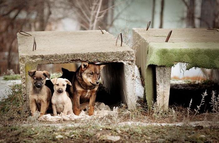 Животные, брошенные на произвол судьбы. Фото: magazin-zoolog.ru