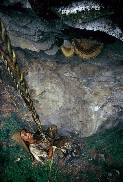 Используя веревочные лестницы, охотники за медом спускаются к ульям