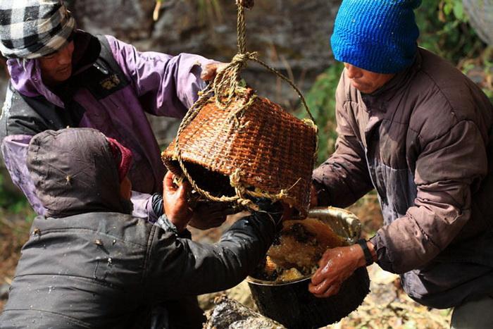 Для коренных жителей Непала добыча мёда – один из основных источников дохода