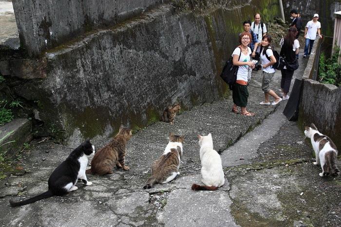 В Houtong проживает более ста кошек