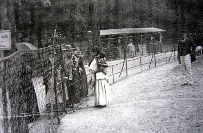 Вольер, обнесенные проволочным забором, в человеческом зоопарке