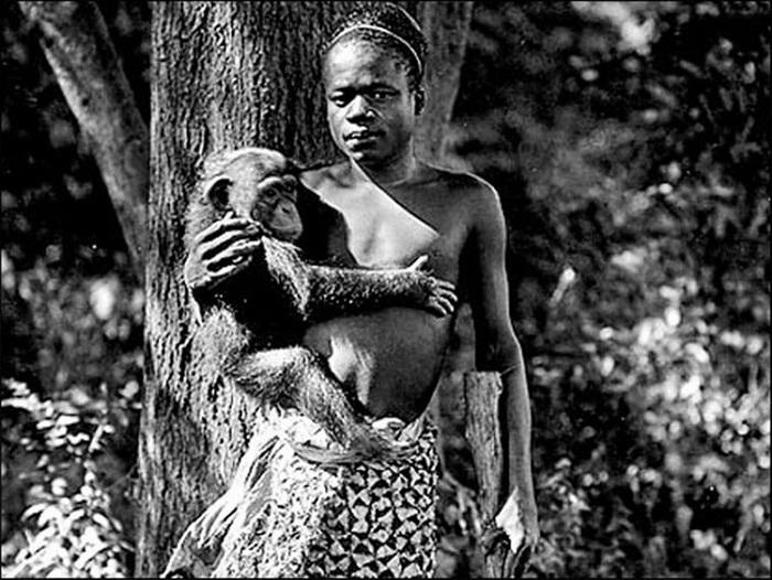 Туземцы часто представлялись как переходное звено в эволюционной цепочке и жили в вольерах с обезьянами. Пигмей Ота Бенг, Всемирная выставка 1904 г. в Сент-Луисе.
