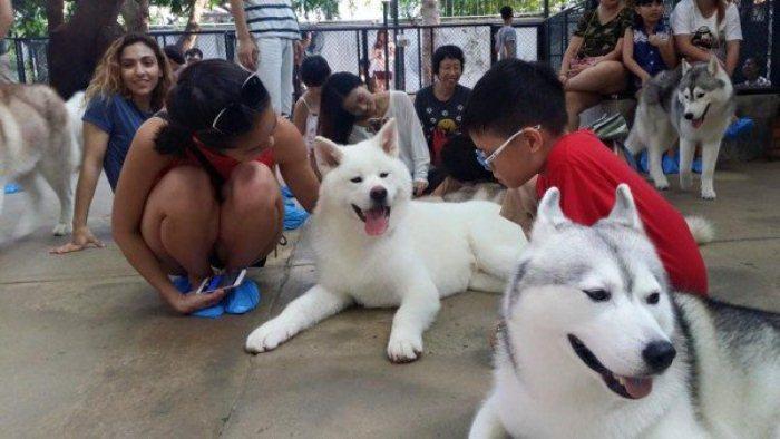 Дети и взрослые с удовольствием проводят время с собаками.