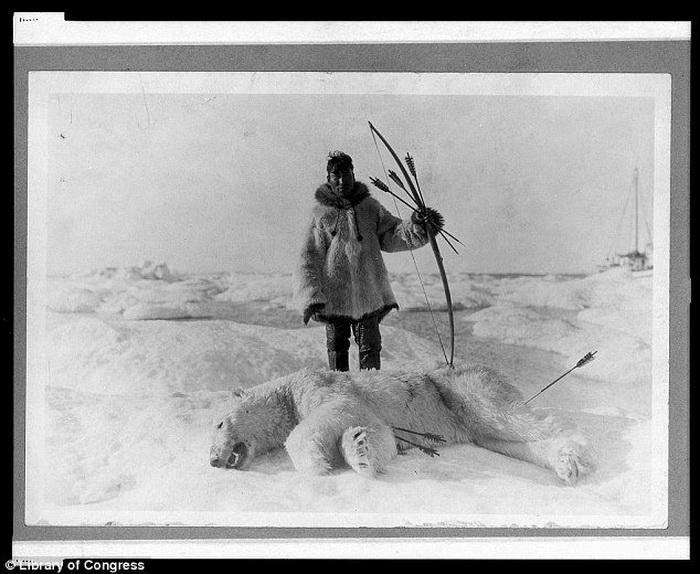Охотник позирует с луком и стрелами рядом с убитым им полярным медведем