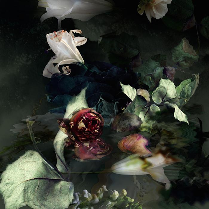 Загадочные фотографии цветов от Изабель Менин (Isabelle Menin)