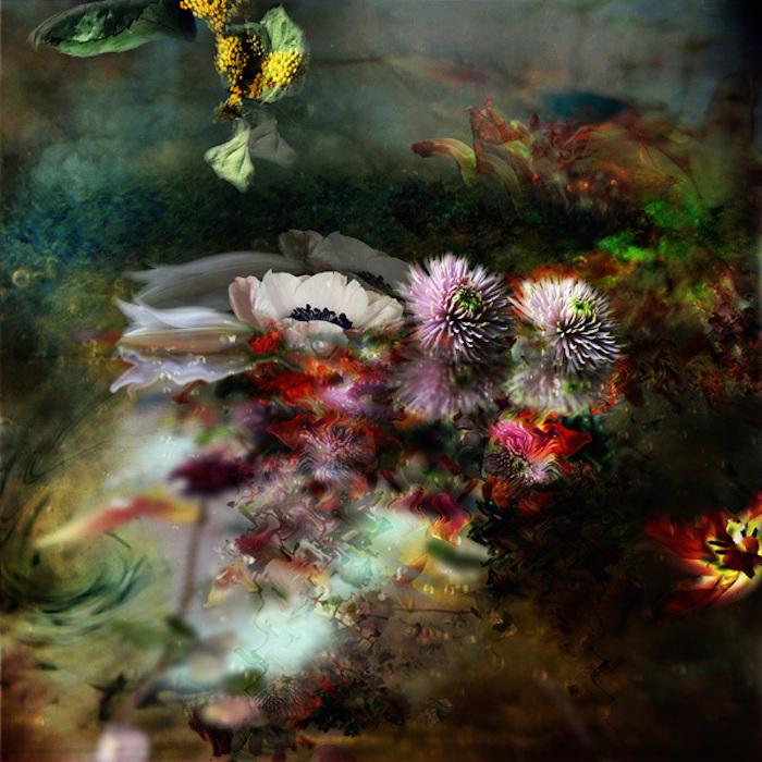 Фотографии цветов