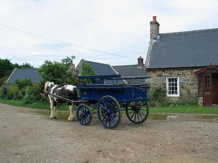 основной транспорт на Сарке - лошади