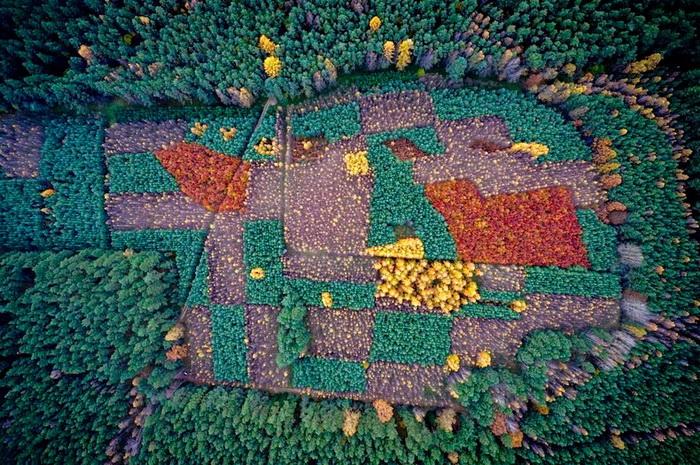 Лес в Польше. Аэрофотография от Каспера Ковальски (Kacper Kowalski)