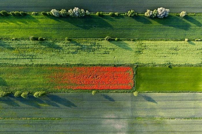 Поле в Польше. Аэрофотография от Каспера Ковальски (Kacper Kowalski)