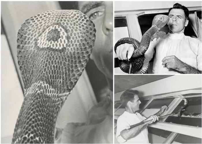 Билл Хааст за свою жизнь пережил 172 укуса ядовитых змей.
