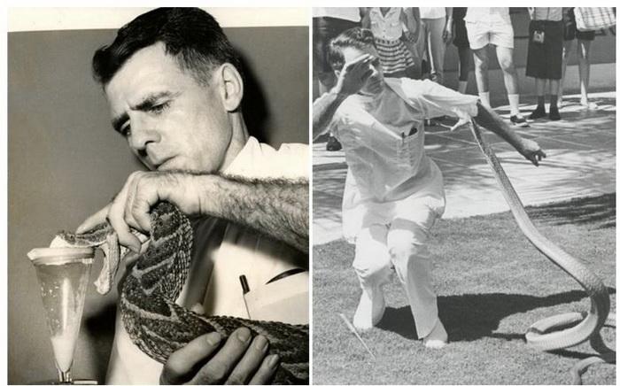 Слева - сцеживание змеиного яда; справа - выступление перед публикой.