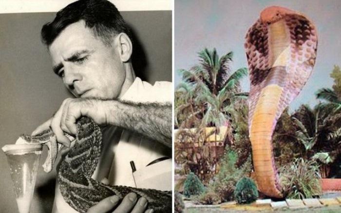 Серпентарий в Майами: амбициозный проект человека-змеи.