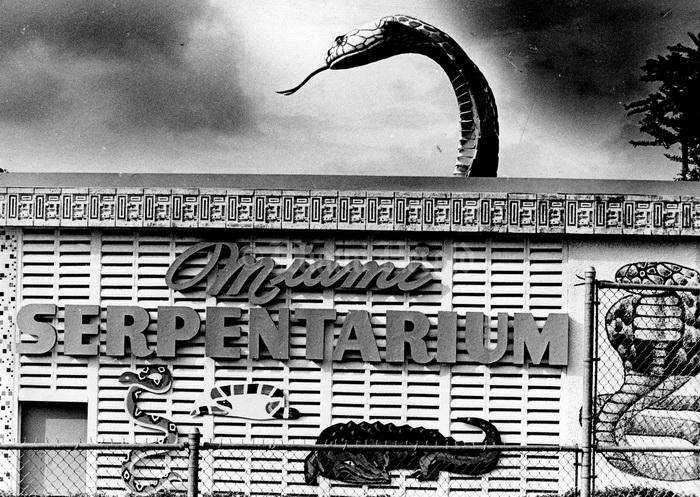 Билл Хааст открыл в Майами серпентарий, который пользовался огромной популярностью у туристов.