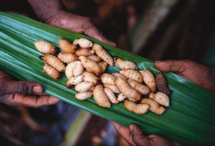 Личинки - источник протеина