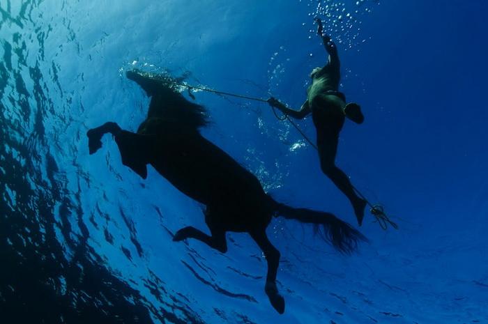 Подводные фотографии от Курта Арриго (Kurt Arrigo)