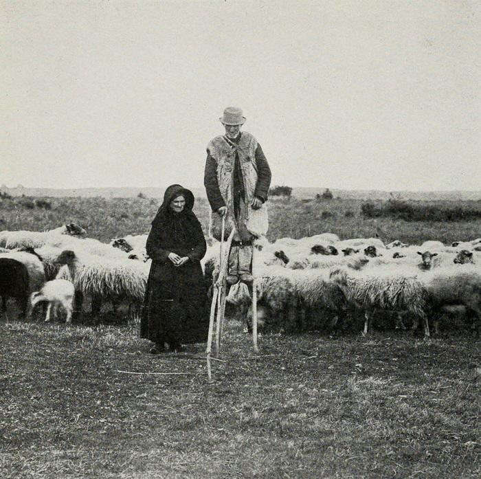 Поголовье скота в Ланде достигало миллиона овец.