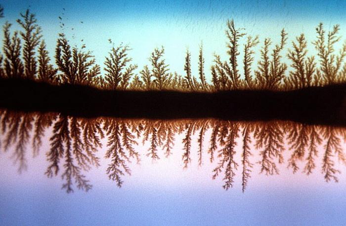Деревья, отражающиеся в воде