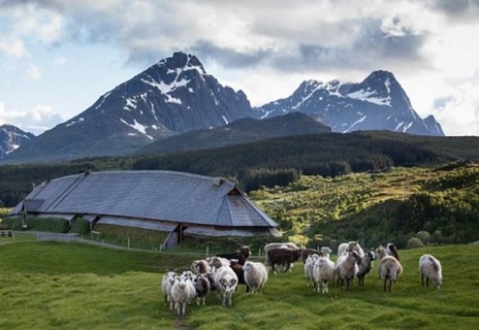 Овцы в музейном комплексе под открытым небом Лофотр, Норвегия.