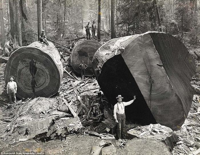 Человек ничтожно мал по сравнению с огромными стволами деревьев