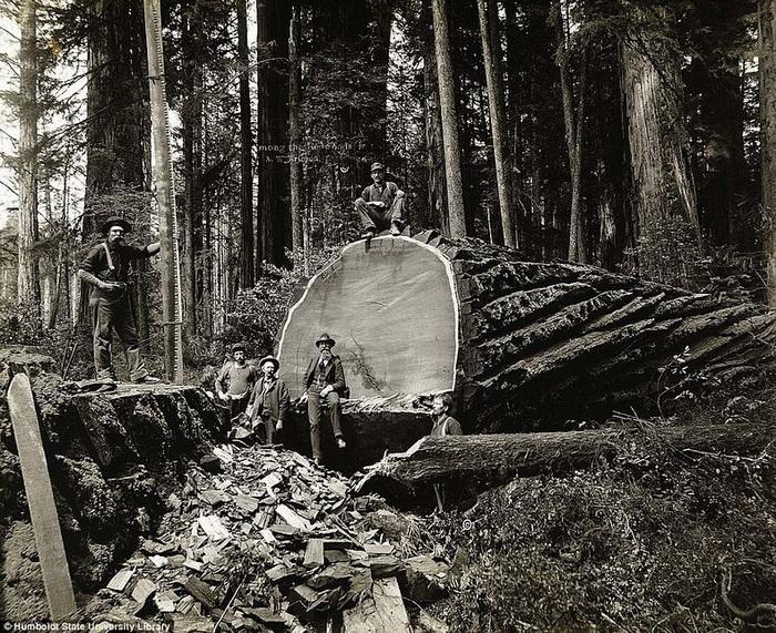 Фотографии, на которых запечатлена вырубка лесов в Канаде