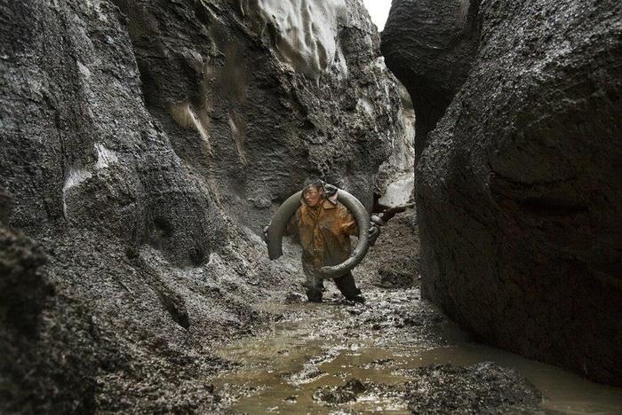 Добыча бивней мамонта