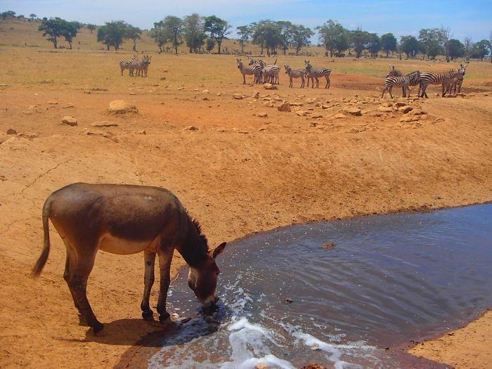 Спасение животных от засухи